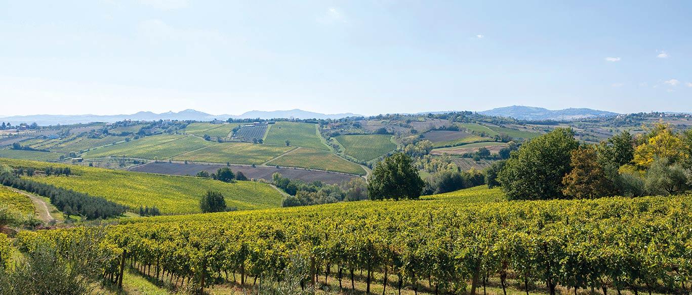 vini della romagna cantina san patrignano online